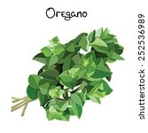 fresh oregano sprigs. oregano... | Shutterstock .eps vector #252536989