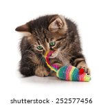 Stock photo cute kitten caught toy mouse isolated on white background focus on the mouse 252577456