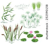 set of wetland plants.... | Shutterstock .eps vector #252590158