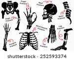 set bone fracture icon   pelvic ... | Shutterstock .eps vector #252593374