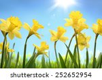 Yellow Daffodil Flower In The...