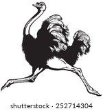 Running Ostrich   Side View...