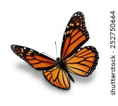beautiful monarch butterfly... | Shutterstock . vector #252750664