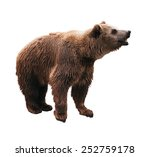 standing brown bear with opened ... | Shutterstock . vector #252759178