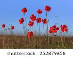red poppies on green field.... | Shutterstock . vector #252879658