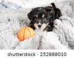 Tiny Puppy On Fluffy Blanket...