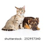 Stock photo tabby cat sitting next to a sad dog isolated on white background 252957340