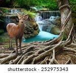 sambar deer standing beside... | Shutterstock . vector #252975343