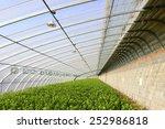 beautiful greenhouses  | Shutterstock . vector #252986818