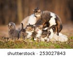 Stock photo saint bernard puppy with little kittens 253027843
