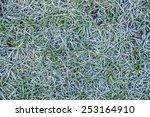 Closeup Of Frozen Grass Blades...
