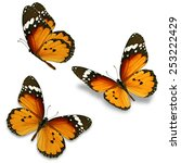 Stock photo three orange butterfly isolated on white background 253222429