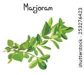 fresh marjoram sprigs. marjoram ... | Shutterstock .eps vector #253276423