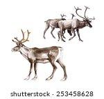 the reindeer  rangifer tarandus ... | Shutterstock . vector #253458628