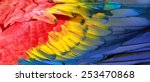 parrot feathers  red  yellow... | Shutterstock . vector #253470868