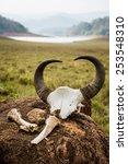 gaur   indian bison  skull and... | Shutterstock . vector #253548310
