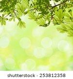 Fresh Spring Of Horse Chestnut...