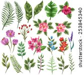 Stock vector set of traditional and tropical flowers and leaves 253845340