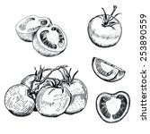 hand drawn ink tomatoes... | Shutterstock .eps vector #253890559