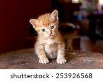 Stock photo cute kitten sitting on the log 253926568