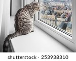 Cat Sitting On A Window Sill...