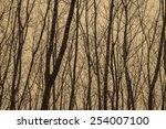 Autumn Forest Plantations
