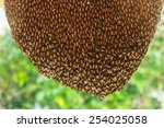 Close Up Of Hardworking Bees O...