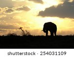 A Beautiful Silhouette Of A...