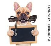 Stock photo fawn french bulldog with leather leash ready for a walk with owner holding a blank blackboard 254078359