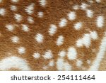 Spotted Texture Of Fallow Deer...