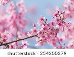 spring sakura cherry blossom | Shutterstock . vector #254200279