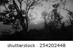 silhouettes of big trees in the ... | Shutterstock .eps vector #254202448