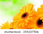orange gerber flowers on color... | Shutterstock . vector #254237506
