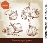 vector hand drawn garlic set....   Shutterstock .eps vector #254250946