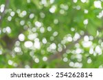 green nature blur bokeh... | Shutterstock . vector #254262814