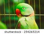 close up of alexandrine...   Shutterstock . vector #254265214