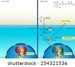 retinoic acid signaling pathway   Shutterstock . vector #254321536