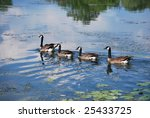 Four Geese On A River