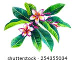 frangipani branch. watercolor... | Shutterstock .eps vector #254355034