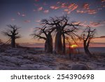sunrise with baobab trees in... | Shutterstock . vector #254390698