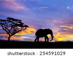 Elephant Silhouette In The Wild