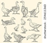 vector collection of goose  ... | Shutterstock .eps vector #254611360