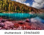 evergreen trees lining a pure... | Shutterstock . vector #254656600