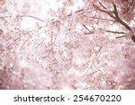 sakura season or hanami....   Shutterstock . vector #254670220