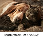 Stock photo cat pillow dog blanket 254720869