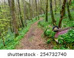 path leading through beautiful...