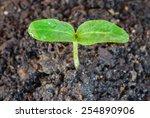 Seedling Growth