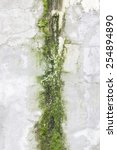 Concrete Wall With Moss  Detai...