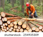 The Lumberjack Working In A...