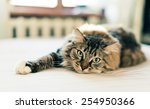 Stock photo grey cat lying on bed 254950366